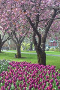 Join Maria for a VIP Intensive in Victoria, BC, home of the world famous, Butchart Gardens.