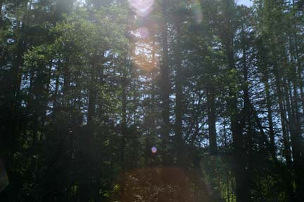 sunlight thru trees at Sooke Potholes.